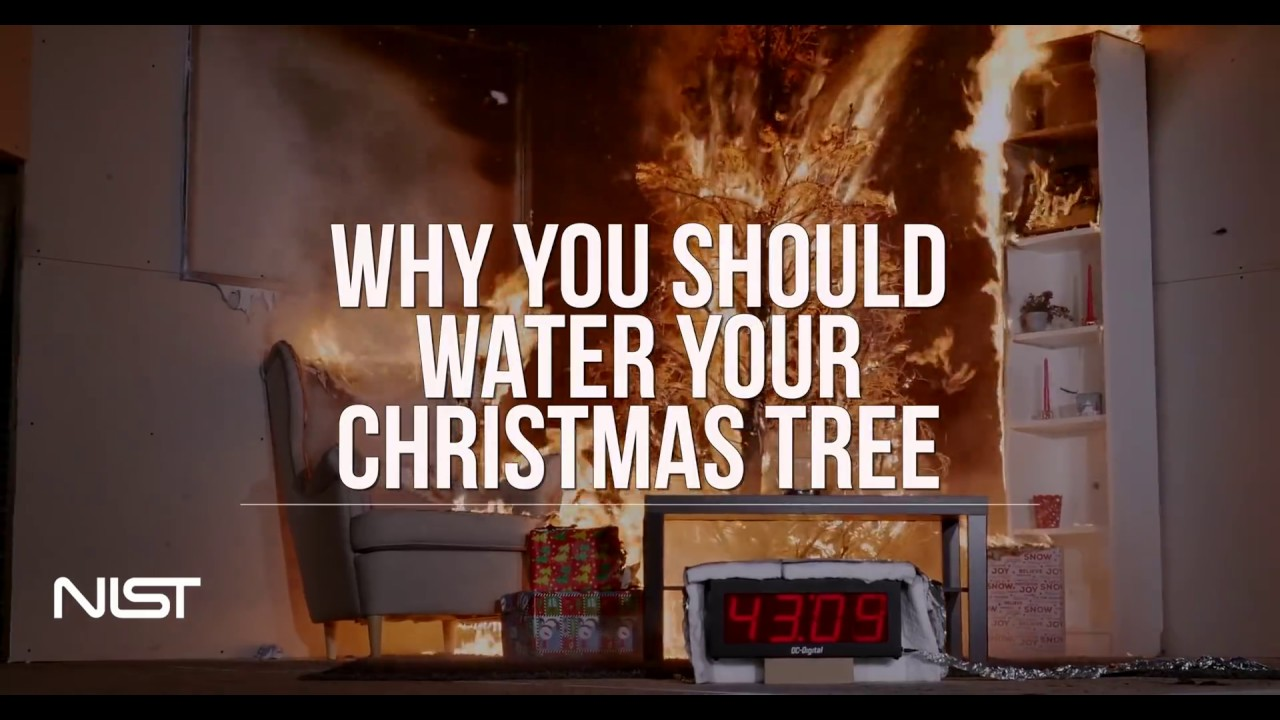 christmas tree fire watered tree vs dry tree - What Do You Put In Christmas Tree Water