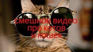 НОВИНКА! Видео приколы про котов. Смешное видео про кошек до слёз.