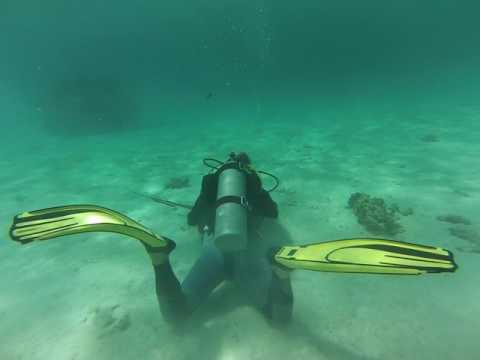 Stingray Dive Cayman 1