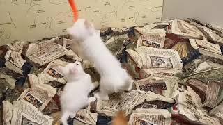 малыши-карандаши белые котятки