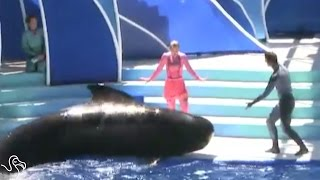 Another Whale Dies At SeaWorld