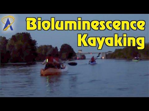 Bioluminescence Kayaking off Merritt Island with A Day Away Kayak Tours