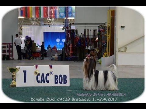 DUO CACIB Bratislava 2.4.2017 - BEST OF BREED