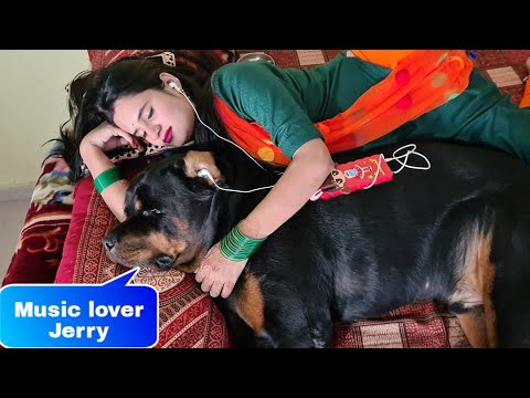 My dog listening music with my wife||funny dog videos.
