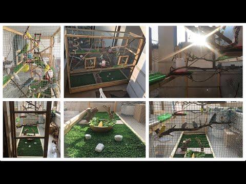 Building The Most Beautiful Aviary (Budgie Kingdom)