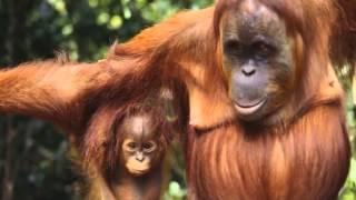 Животные тропиков