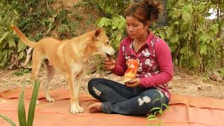 Cute Girl Carrying Big Dog Into Forest And Then Feeding So Sweeties, Best Movie 2020