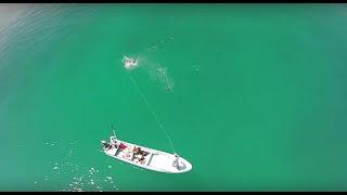Tarpon Drone Fly Fishing Mendozaflyshop.com Pesca con Mosca