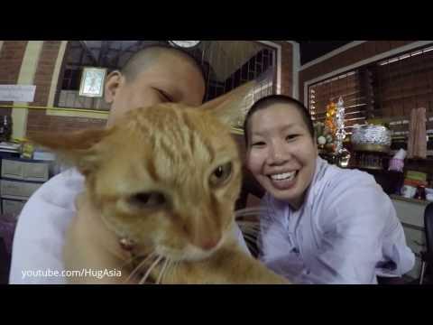 Thai confession Chiangmai พิธีเปิดกรรมวัดถ้ำตองเชียงใหม่