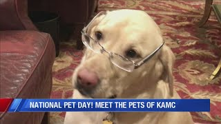 National Pet Day! Meet The Dogs Of KAMC