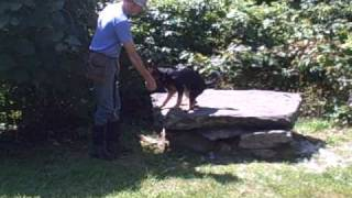 Natural Dog Training Kevin Behan Training Hero