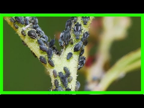 Schädlinge An Kübelpflanzen Garten Kaffee Oder Tee Youtube