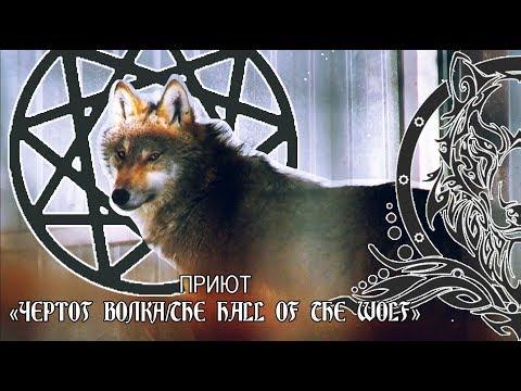 Вопрос: Что Вы знаете о Чертоге волка?