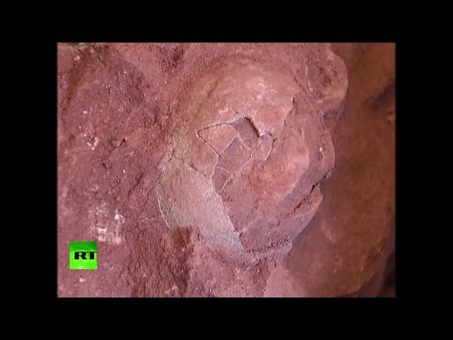 70 million-year-old dinosaur eggs found in China