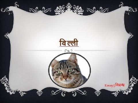 hindi essay on cat बिल्ली पर निबंध  hindi essay on cat बिल्ली पर निबंध