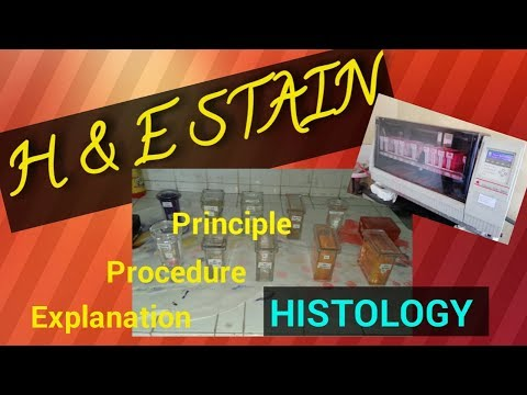 H And E Staining Procedure/H And E Staining Histology/Hematoxylin And Eosin Stain/STAR LABORATORY