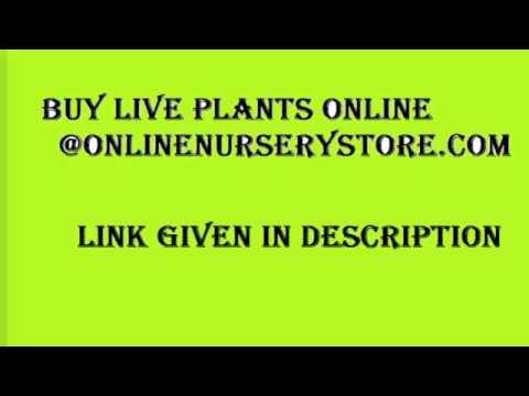 Live Plants Online Www Onlinenursery Com