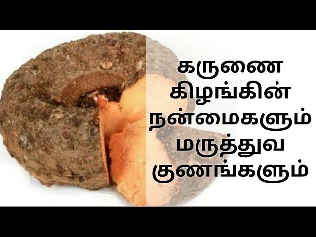 Karunai Kilangu கருணை கிழங்கின் மருத்துவ குணங்கள்
