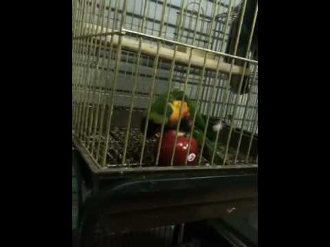 Horney bird sex