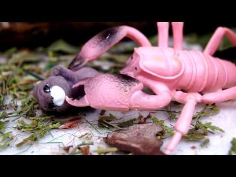 ШКОЛА СКОРПИОНОВ! ЯД ДЛЯ ЖИВОТНЫХ! Мультики про динозавров и животных! Видео игрушки