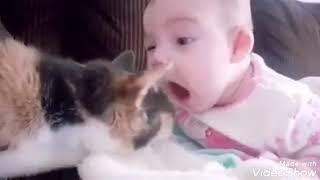 الأطفال والقطط 😻