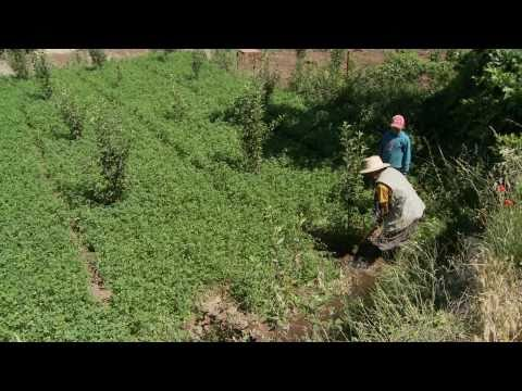 More water equals more fruit for Morocco's farmers