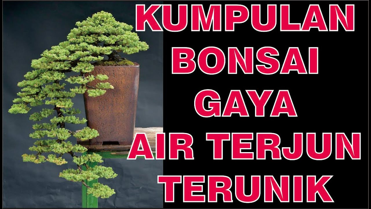 Inspirasi Bonsai Gaya Air Terjun Cascade Bonsai Inspirations