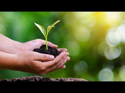 Nachhaltigkeit – ein Selbstversuch - w492