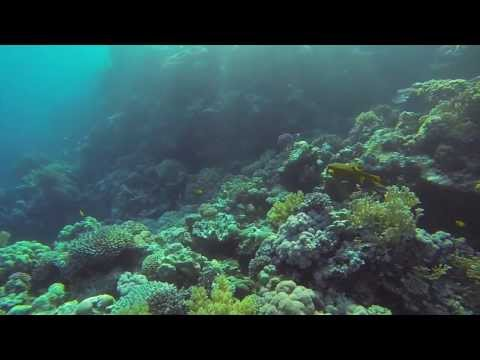 University of Glasgow Tropical Marine Biology 2013