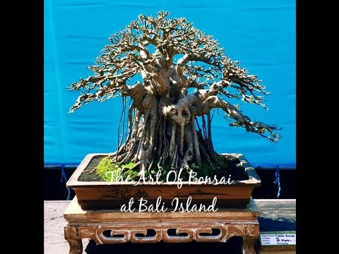 Pameran Bonsai HUT Gianyar, Bali 2018 || Bonsai Exhibition G