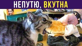 Приколы с котами. НЕПУТЮ, ВКУТНА | Мемозг #300