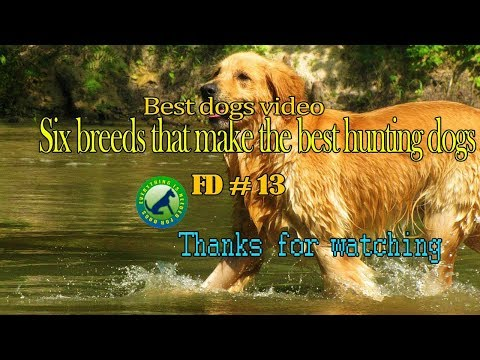 Six breeds that make the best hunting dogs - FD 13