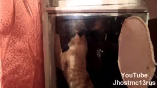 Приколы с животными 2013 - ловля бабочек за окном