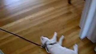 Leash Training Cats