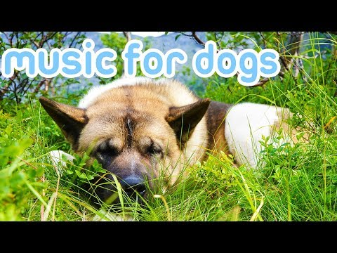 Deep Separation Anxiety Music for Dogs! Helped Over 10 Million Dogs!