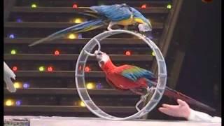 Trained parrots