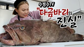 A giant 900,000 won Kelp grouper, is it real?
