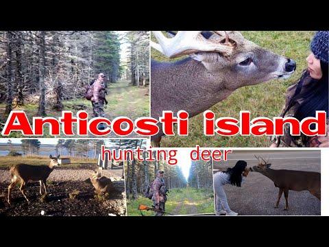 Anticosti Island Hunting Deer  𝐐𝐔𝐄𝐄𝐍𝐉𝐄𝐙𝐀𝐁𝐄𝐋