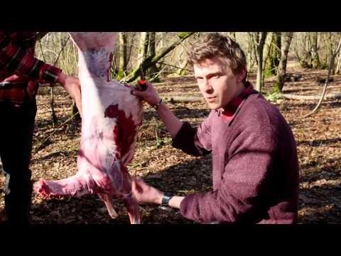 Deer Butchery 101