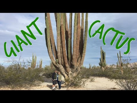 Valley of the Giants! ~ RVing in Mexico