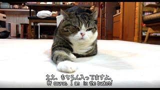 もちろん、バーレルなねこ。-Of course, Maru is in the bucket.-