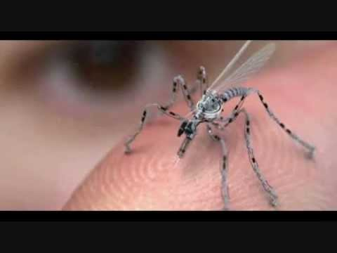 Insect Spy Drones Used By Military