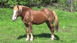 Красивые лошади и смотреть видео про лошадей(Лошади России гуляют на солнышке И кушают свежую травку., 2016-05-10T04:06:57.000Z)