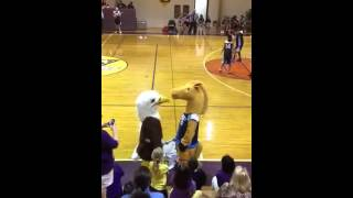 Epic battle of eagle and horse fight