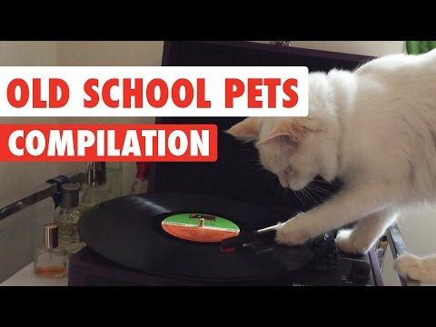 Old School Pets Video Compilation 2017