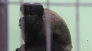 ヒゲサキ (東山動植物園) 2017年11月18日