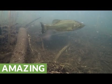 Camera hidden at beaver lodge records incredible unknown footage