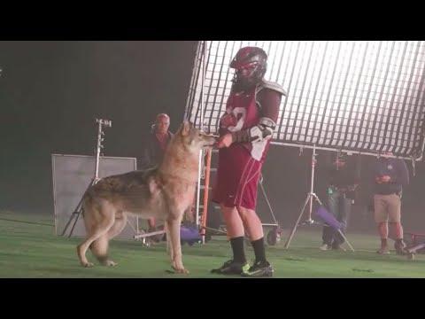 Teen Wolf 6×11 lacrosse & wolf behind the scenes