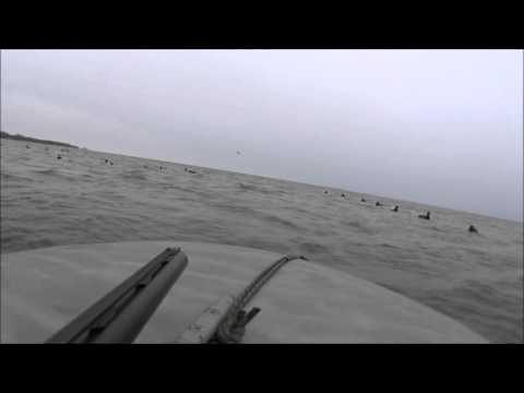 Diver Duck Hunt Green Bay WI. November 13, 2015 - Hi Def