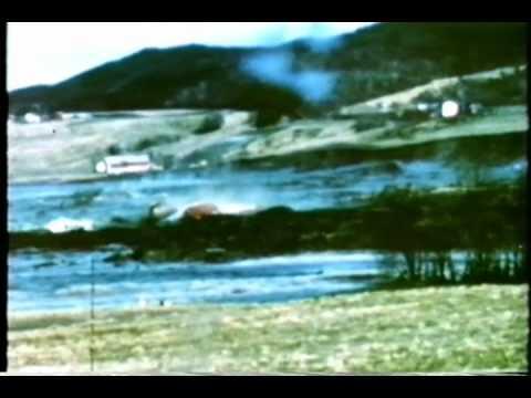 KVIKKLEIRESKRED Rissa 1978